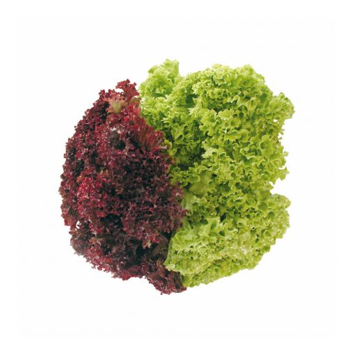 Lollo saláta